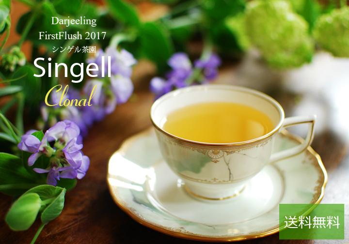 ダージリン2017ファーストフラッシュ・シンゲル茶園